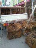 Gupo-market-dogs